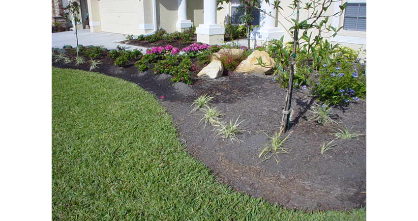 Before Photo of a customers yard