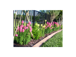 Colorful garden boasting our custom lawn curbs